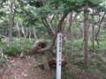 [羽幌][焼尻島] 奇木「知恵の輪」