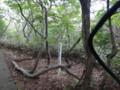 [羽幌][焼尻島] 奇木「巣立ちの桜」