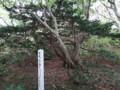 [羽幌][焼尻島] 奇木「ン?」