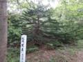 [羽幌][焼尻島] 珍木「末広」