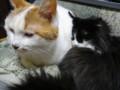 [猫] おねむ+おねむ