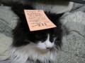 [猫] おみやがないにゃ