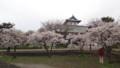 [松前] 冬桜だけ満開
