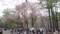 円山公園のようす