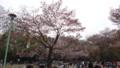 [札幌] 花見に興じる人々