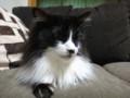 [猫] にゅっ
