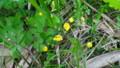 [礼文][8時間コース] 礼文島の花たち・8