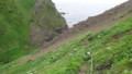 [礼文][8時間コース] ザレた崖を下る