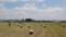 牧草ロール収穫中