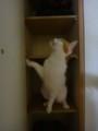 [猫] ここがあやしいのにゃ
