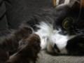 [猫] 解せぬ…