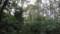 ダケカンバ帯(注:ここは標高270mです)