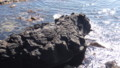 [利尻町] 寝熊の岩