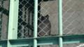 [釧路][動物] シマフクロウ
