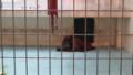 [釧路][動物] オランウータン