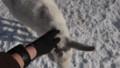 [釧路][動物] なつこい山羊