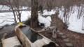 [八雲][温泉] 手前丸木浴槽、奥に小浴槽