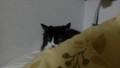[猫] ひっそり…
