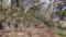 山上大神宮の登り口