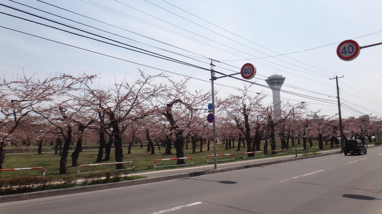 函館も咲いてる!
