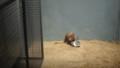 [札幌][円山動物園][動物] おさかんなウサギさんたち