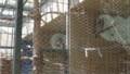 [札幌][円山動物園][動物] 右アメリカワシミミズク、中央エゾフクロウ