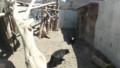 [札幌][円山動物園][動物] マレーグマ