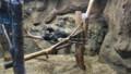 [札幌][円山動物園][動物] ダイナミックなねぞう
