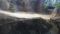 [札幌][円山動物園][動物] ガビアルモドキ