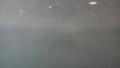 [札幌][円山動物園][動物] 完全に水中に隠れているガビアルモドキ