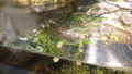 [札幌][円山動物園][動物] ニシキセタカガメ