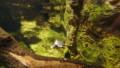 [札幌][円山動物園][動物] インドセタカガメ