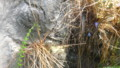 [札幌][円山動物園][動物] チュウゴクワニトカゲ
