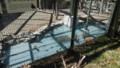 [札幌][円山動物園][動物] シュバシコウ、アカツクシガモ