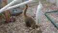 [札幌][円山動物園][動物] 穴掘りに夢中