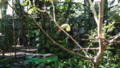 [札幌][円山動物園][動物] サンショクキムネオオハシ