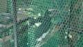 [札幌][円山動物園][動物] ナキサイチョウ