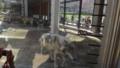 [札幌][円山動物園][動物] でかいぞオオカミさん
