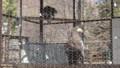 [札幌][円山動物園][動物] オオワシ