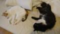 [猫] all your bed are belong to us