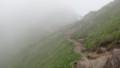 [上富良野][富良野岳][上ホロカメットク山] 山頂直下に広がる広大なお花畑