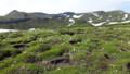 [上川][大雪山] 一面のお花畑