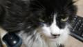 [猫] ゴゴゴゴゴ…
