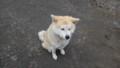 [新得][温泉] 温泉犬