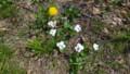野の花たち・1