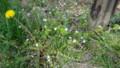 野の花たち・3