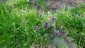 野の花たち・4