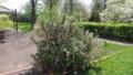 ハナスグリ3種・2