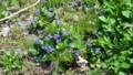 野の花たち・5
