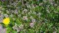 野の花たち・6